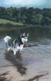 'Hunting' at Shelley Lake