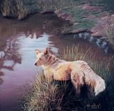 Lobo Watches